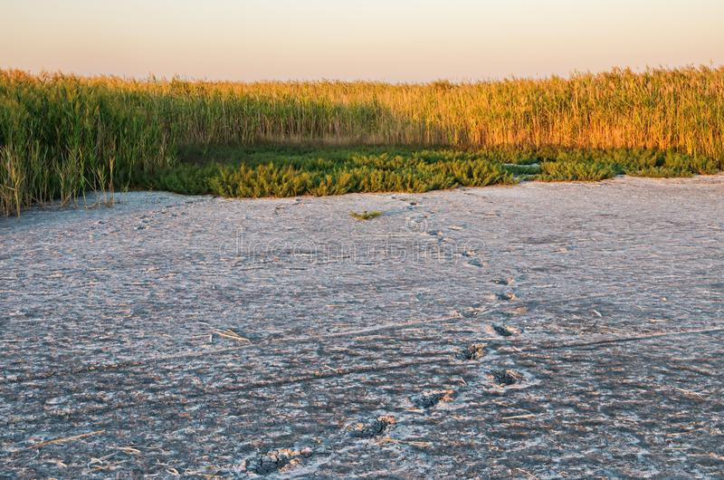 Shore of dried salty estuary. Shore of dried-up salt lake as result of global climate change and sharp warming royalty free stock photo