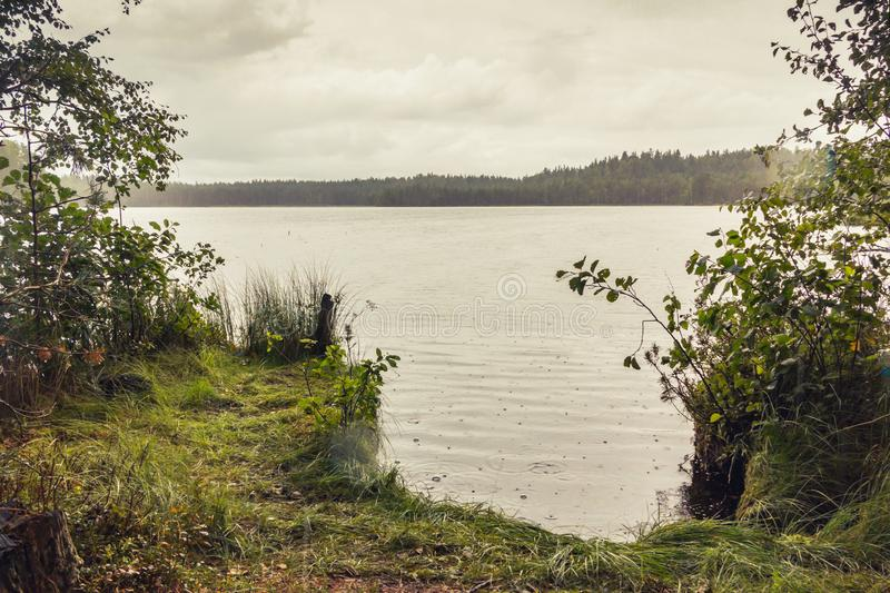 Shore of the forest lake during a strong, prolonged rain in cloudy weather. On the water bubbles from drops stock image