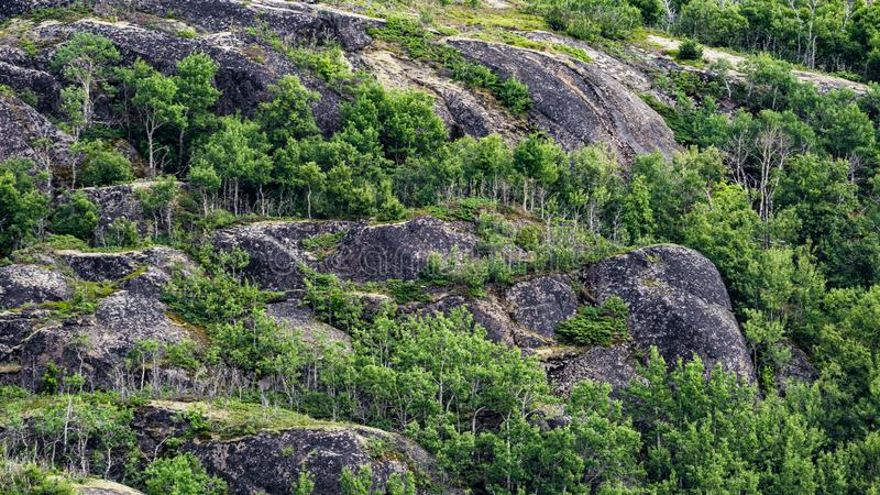 Shore forest in Norway royalty free stock image