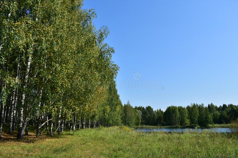 On the shore of a forest pond under the shadow of a birch grove, trail path along the lake, green grass stock photography