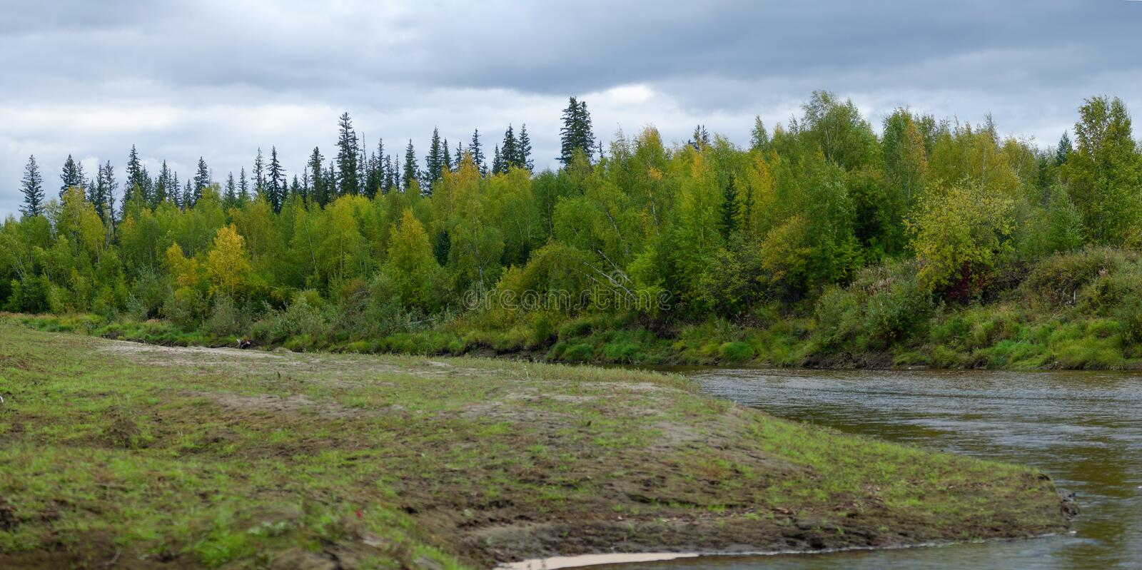 The shore of a small river Kempendyay in the wild North of Yakutia with grass on one side and the bushes. In front of a fir forest on the other stock photos