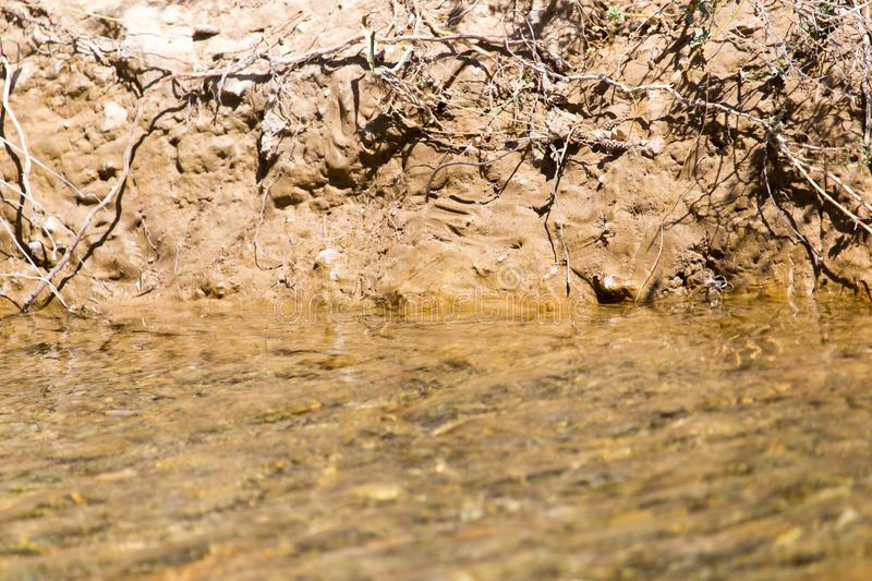 Shore of a small river royalty free stock image