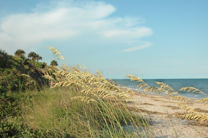 Download Shoreline Stock Images - Image: 284764