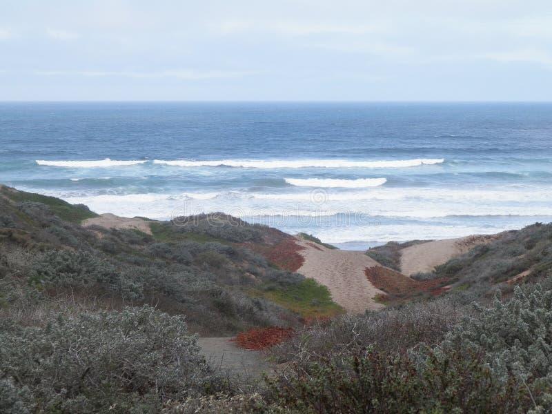 shoreline zdjęcie royalty free
