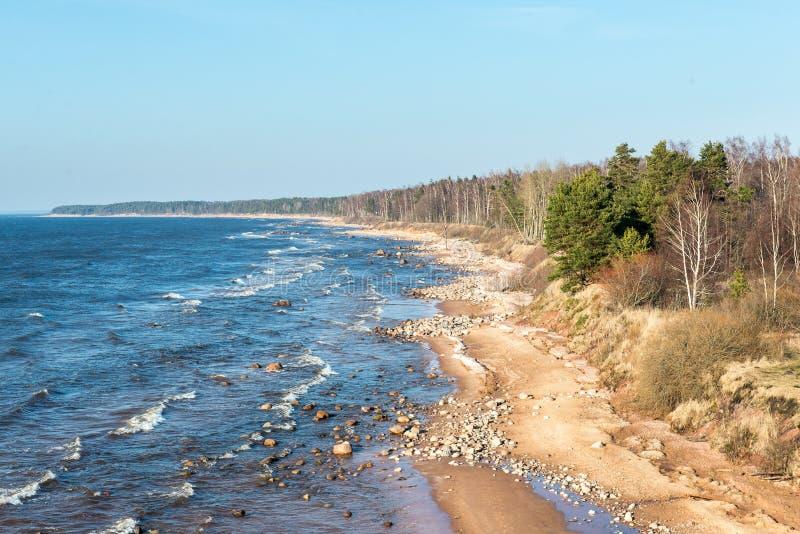Shoreline av stranden för det baltiska havet med vaggar och sanddyn royaltyfri fotografi