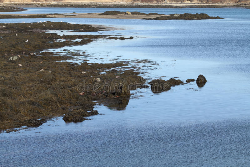 Download Shoreline Banks At Low Tide Stock Image - Image: 24729285