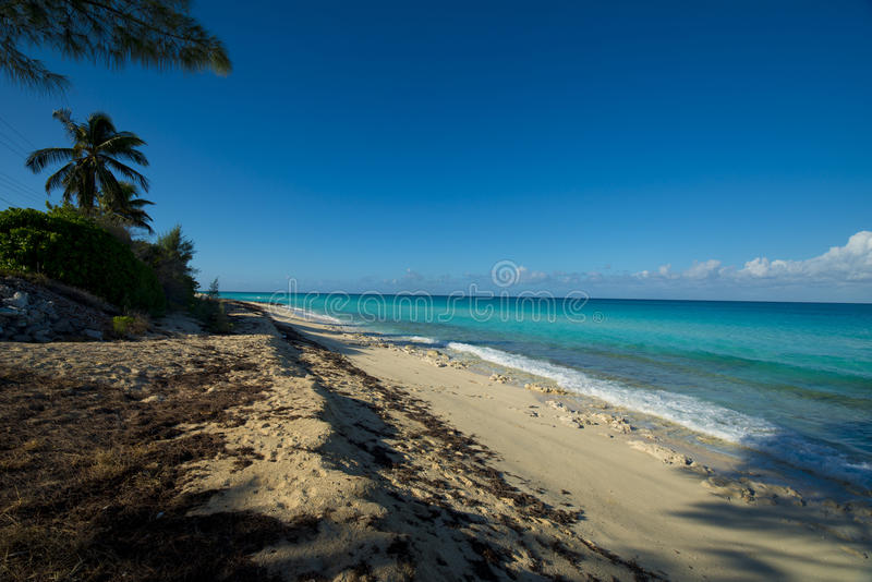 Shoreline of Bimini beach. Bimini of the Bahamas beach with sparkling aqua waters and blue skies. palm trees in the distance royalty free stock images