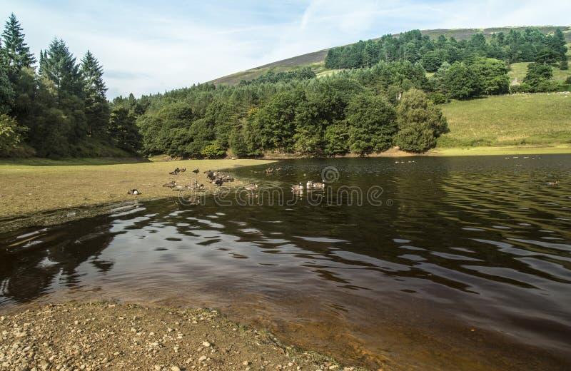 Shoreline chez Fairholmes au réservoir de Ladybower dans Derbyshire images stock