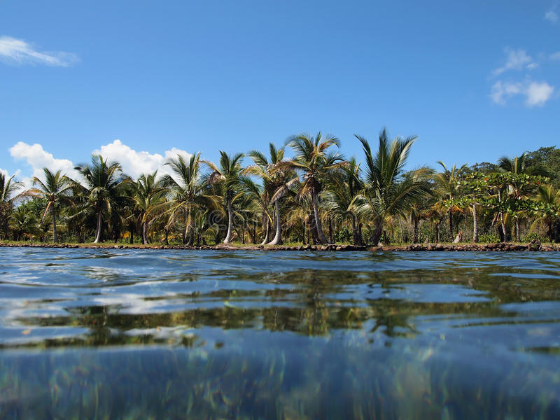 Shoreline With Coconut Trees Stock Photography