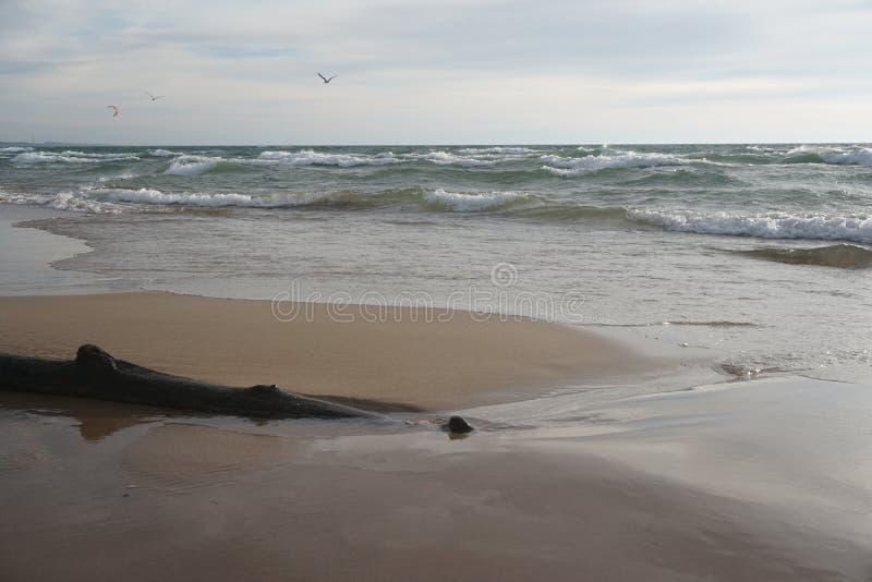 Shoreline with drift wood on beach stock photos