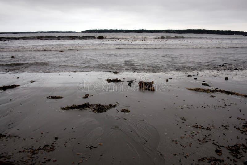 Shoreline su Grey Day freddo in Maine immagini stock libere da diritti
