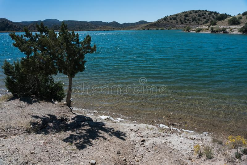Shoreline tree at Bill Evans Lake in New Mexico stock image
