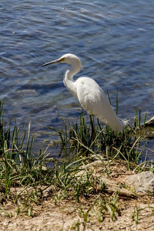 Download Shoreline stock photo. Image of photo, bird, blue, shore - 32089774