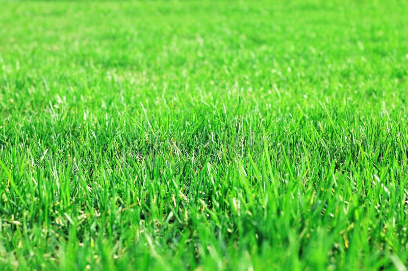 Shorn lawn grass, lush lawn grass, grass texture. Blur focus, can be used as background. Copy space stock image
