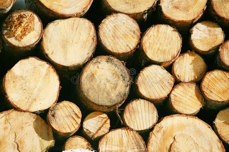 Short del fascio dell'ostacolo del legname del legname fotografia stock libera da diritti