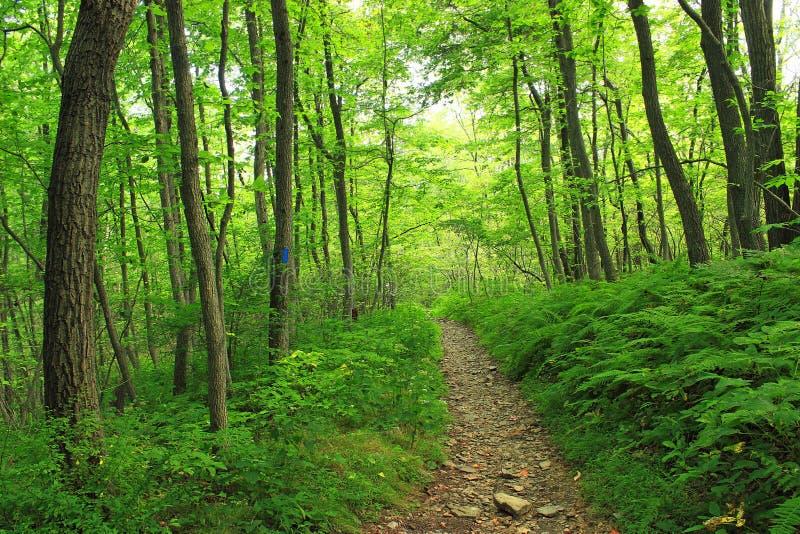 Short Hike (7) Free Public Domain Cc0 Image
