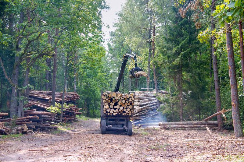 Short log truck, timber truck, loading logs in the forest, manipulator loader logs royalty free stock photography