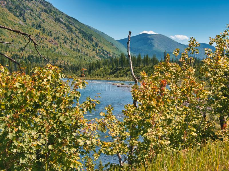 Short Summer of Glacier National Park. Leaves turning red in mid July.  Glacier National Park in northern Montana is a remote, rugged area, but well worth the stock image