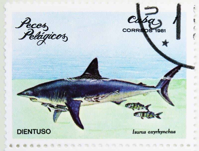 Shortfin Mako Shark (oxyrinchus) del Isurus, serie de los peces de mar, circa 1981 fotografía de archivo