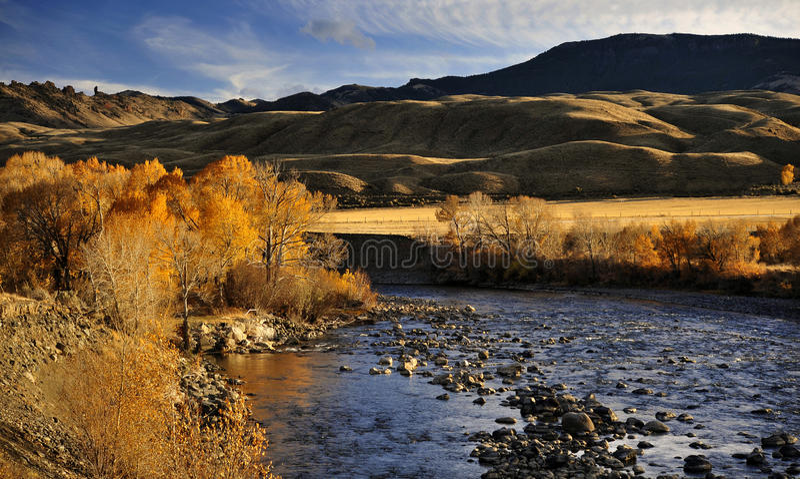 Shoshonefloden och bländaAutumn Leaves Outside Cody, Wyoming royaltyfri fotografi