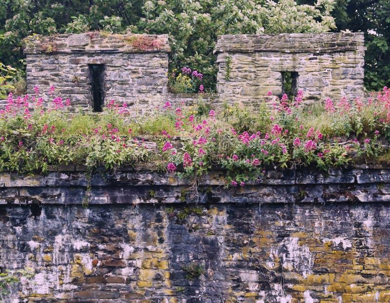 Shot of the Ancient City Wall, Conwy, Walia, GB, Wielka Brytania zdjęcie stock
