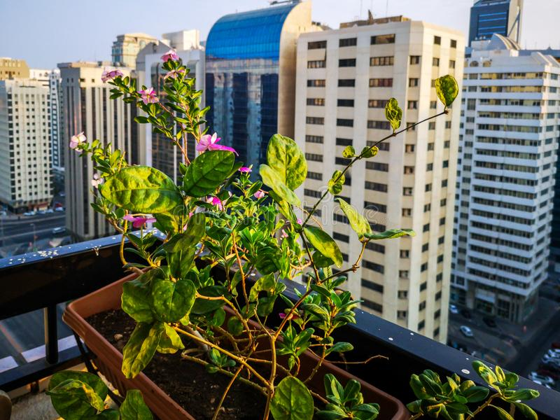Shot of beautiful morning the city. relaxing view from the balcony with flowers stock photography