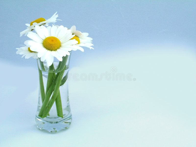 A shot of flowers royalty free stock photography