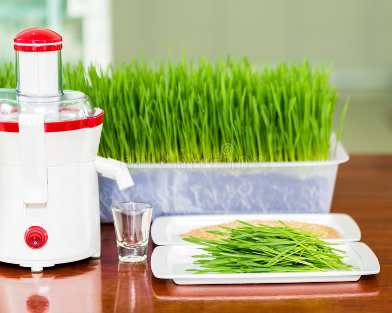 Shot glass of wheat grass with fresh cut wheat grass. And wheat grains stock photos