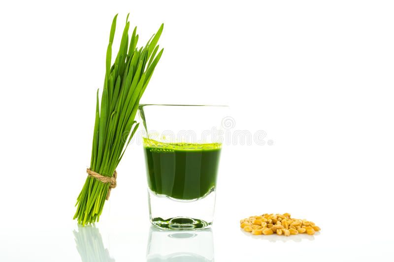 Shot glass of wheat grass with fresh cut wheat grass and wheat g. Rains ingredient stock images