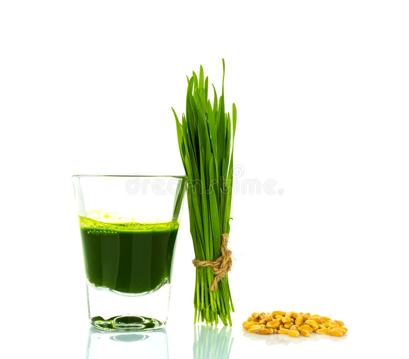 Shot glass of wheat grass with fresh cut wheat grass and wheat g. Rains on white background stock images