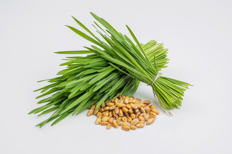 Shot glass of wheat grass with fresh cut wheat grass and wheat g. Rains royalty free stock images
