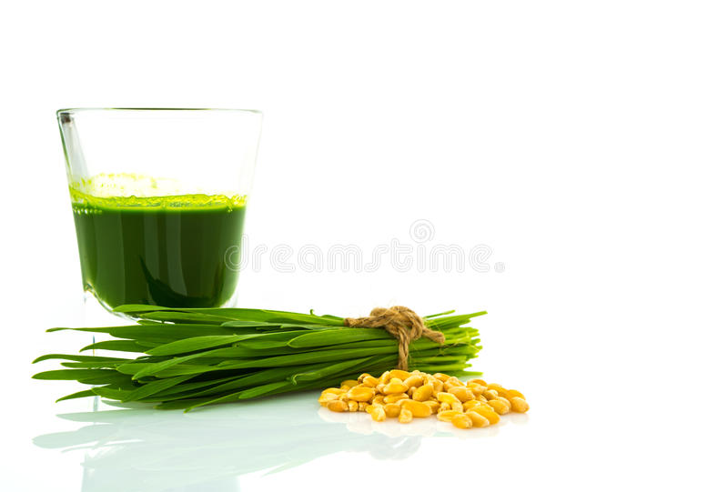 Shot glass of wheat grass with fresh cut wheat grass and wheat. Grains stock images