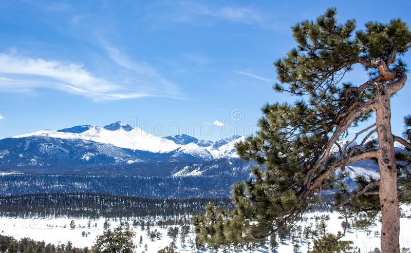 Long's Peak in Rocky Mountain National Park. This is a shot of Long`s Peak in Rocky Mountain National Park in the background with a interesting pine tree in stock image