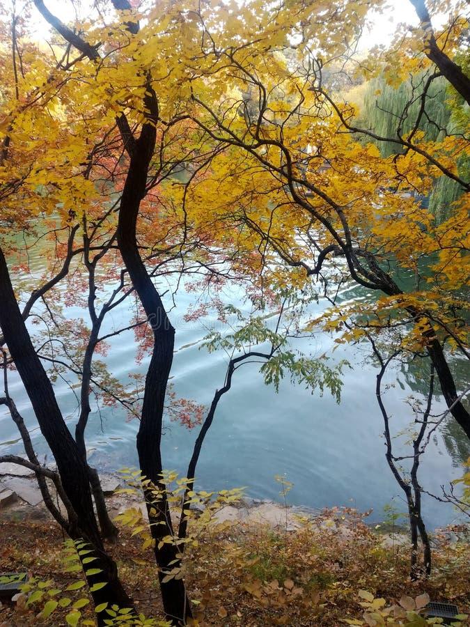 2019111003:Two of the autumn colors of Suzhou street behind Wanshou mountain, Summer Palace, Beijing, China. Shot in November 2019 at Wanshou mountain stock photo