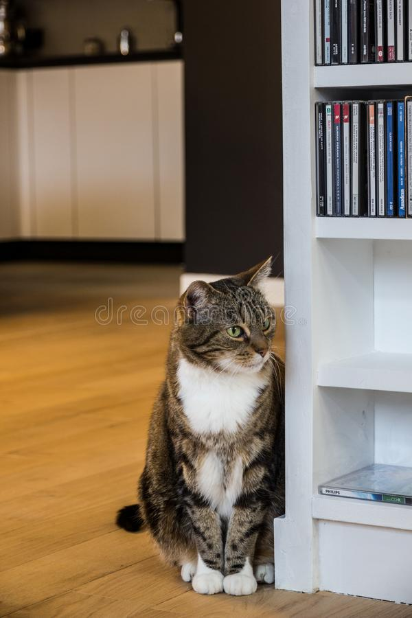 A beautiful cat staring at the living room. On this shot taken on a modern flat, we can admire a beautiful cat staring at the living-room with the kitchen at the royalty free stock photo