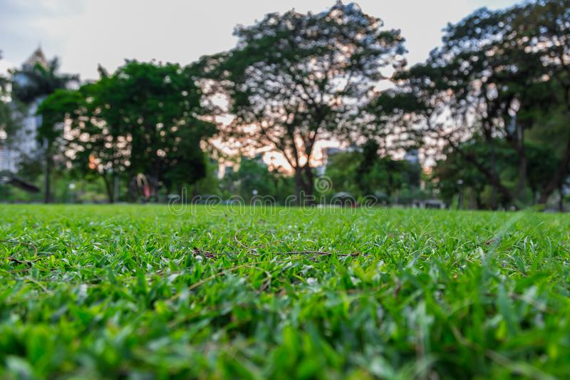 View from the field while sitting royalty free stock photo