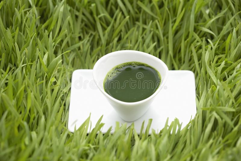 Shot of Wheatgrass Juice royalty free stock images