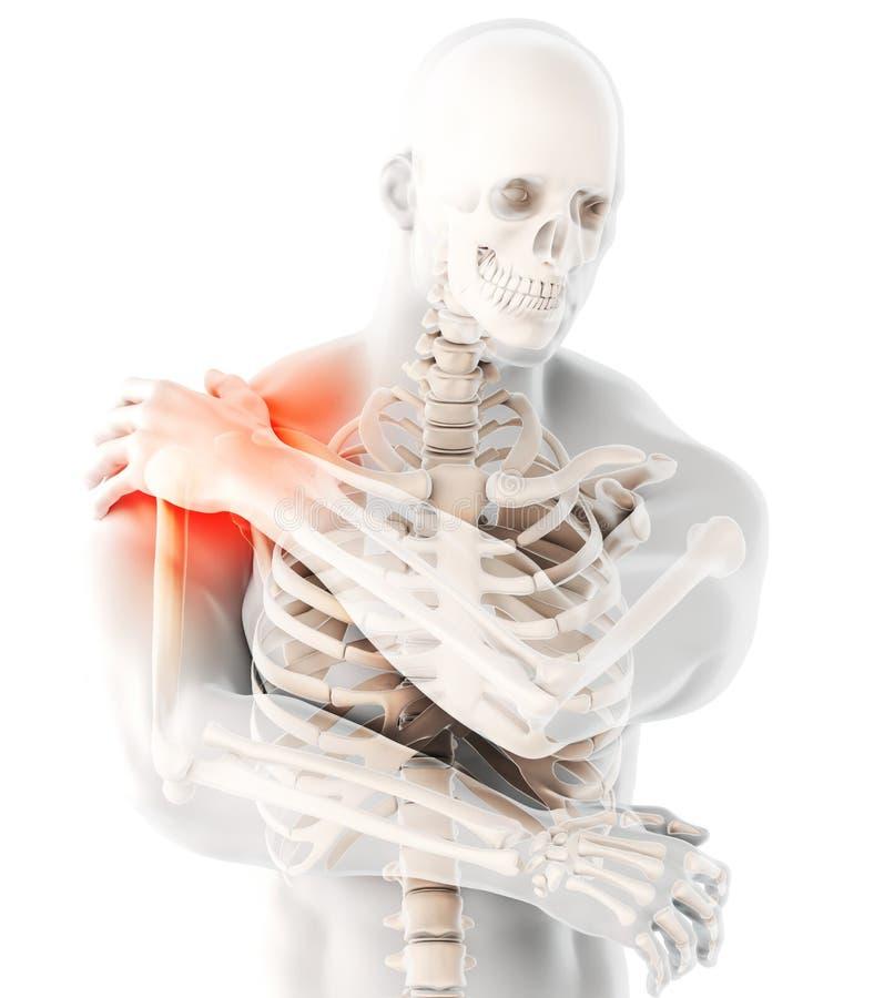 Shoulder painful skeleton x-ray, 3D illustration. stock illustration
