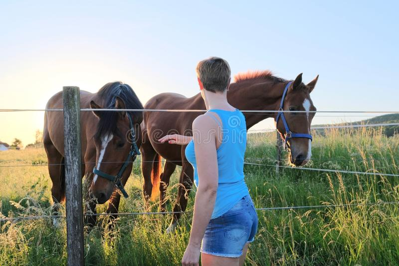 Shoulder view of a woman who caress horses at a farm field at sunset royalty free stock images