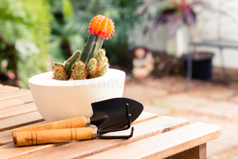 Shovel and gardening fork with cactus stock photos
