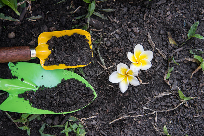 Shovel spoons digging soil and Plumeria. Flower royalty free stock photos