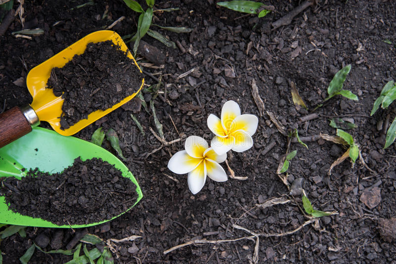 Shovel spoons digging soil and Plumeria. Flower stock photography