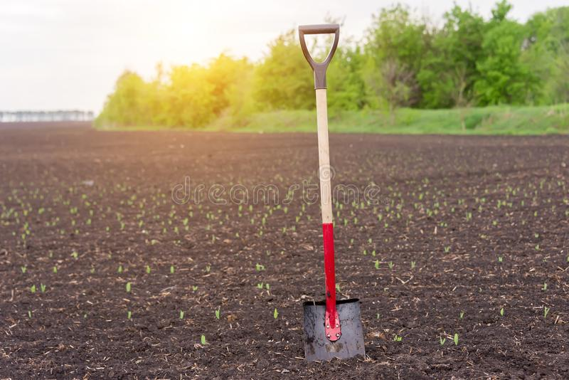 The shovel stands in the ground, in the field royalty free stock photography