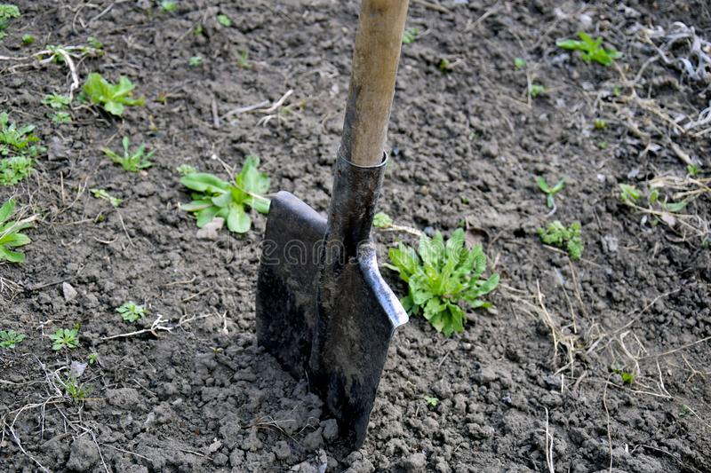 Shovel stuck in the ground in the garden area. Spring work in the garden. Rustic style of life. Selective focus. Close up royalty free stock photos