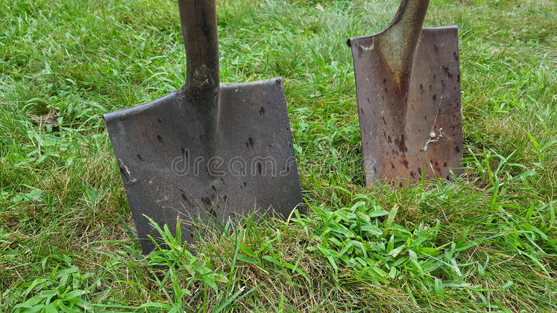 Shovels in sod. Pair of rusty shovels stuck in grass and clover stock photo