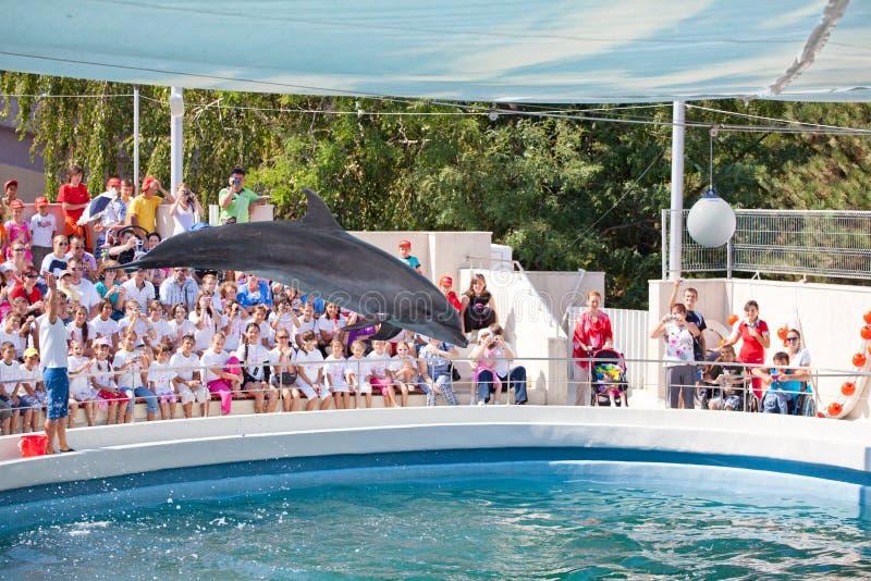 Show at the dolphinarium stock photos