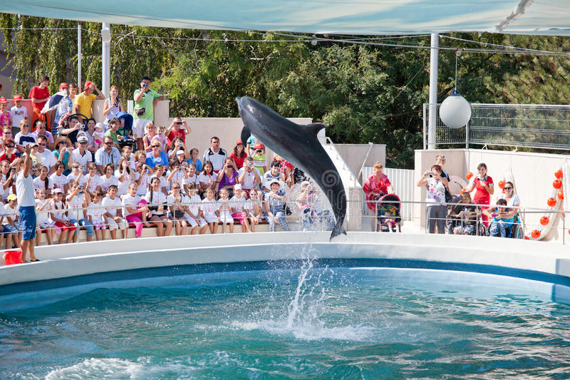 Show at the dolphinarium royalty free stock photography
