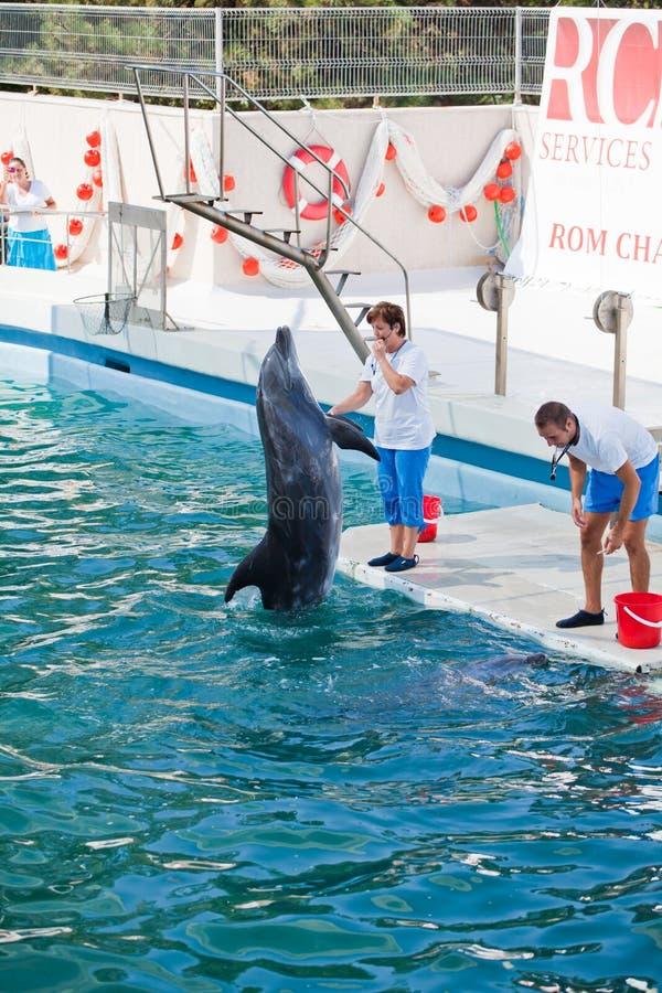 Show at the dolphinarium royalty free stock photos