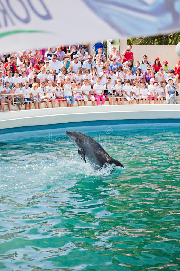 Download Show At The Dolphinarium Editorial Photo - Image: 16000416