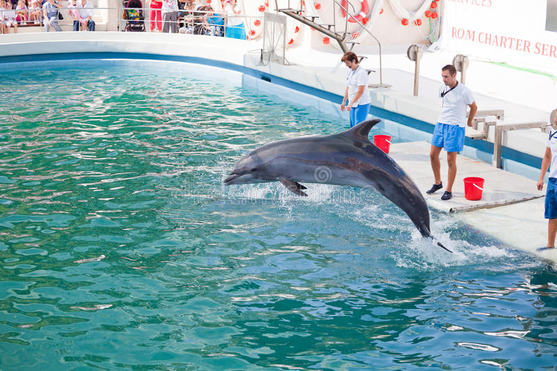 Download Show at the dolphinarium editorial stock image. Image of mammal - 16000449